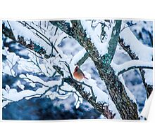 Female Cardinal In Snowy Tree Poster