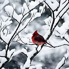 Cardinal In Snow Covered Tree by mcstory