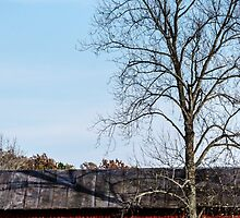 Red Barn With Tree by mcstory