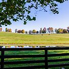 Kentucky Horse Farm by mcstory
