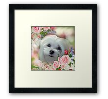 Snowdrop the Maltese - The Face that Melts my Heart Framed Print