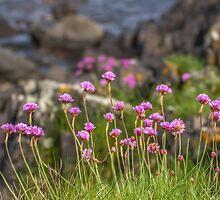 Coastal Flowers along the Bangor Coast by Alan Campbell