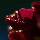 Dew in formation  by Nicole  Markmann Nelson