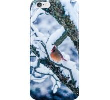 Female Cardinal In Snowy Tree iPhone Case/Skin