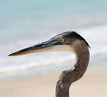 Beached Heron by Bob Hardy