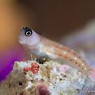 Goby by James Deverich