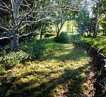0317  Jenny's Garden by Peter Hogarth