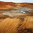 Mud Pots and Steam Vents by karina5