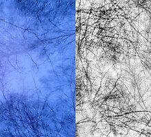 Bare trees branches 4 by AnnArtshock