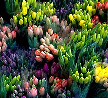 Bunches of Tulips by Marylou Badeaux