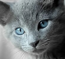 Blue Eyed Kitten by Peggy  Volunteer Photographer FOR RESCUE ANIMALS