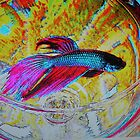 Betta Fish of Color by Rita  H. Ireland