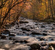 Autumn in Tremont by James Hoffman