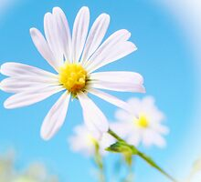 WHITE FLOWER by Sandra  Aguirre