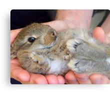 WOW!!- This Is Sooooo Comfy!! - Baby Bunny - NZ Metal Print