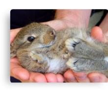 WOW!!- This Is Sooooo Comfy!! - Baby Bunny - NZ Canvas Print