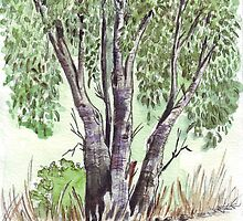 Blue gum trees across the road from my studio by Maree  Clarkson
