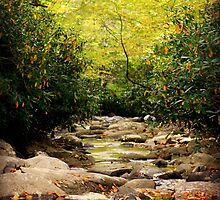 River Stone Path by ArdenBryant