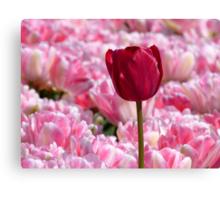 Oops... I Don't Think I Belong Here... - Tulip Plantation - NZ Canvas Print