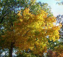 Brilliant Colors in Kingsland Pointe Park, Sleepy Hollow NY by Jane Neill-Hancock