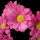 Pink Posy by Sheila Laurens