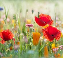 The Meadow by Jacky Parker