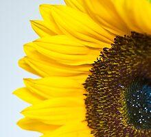 Sunnier than I by Sheila Laurens