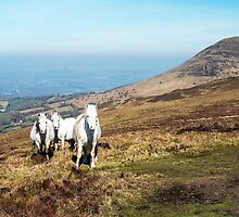 White Horses in the Brecon Beacons by Nick Jenkins
