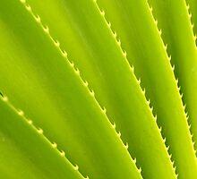 Spiky Plant by mrdoomits
