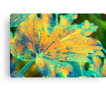 Castor Oil Plant Leaf in Orange Canvas Print