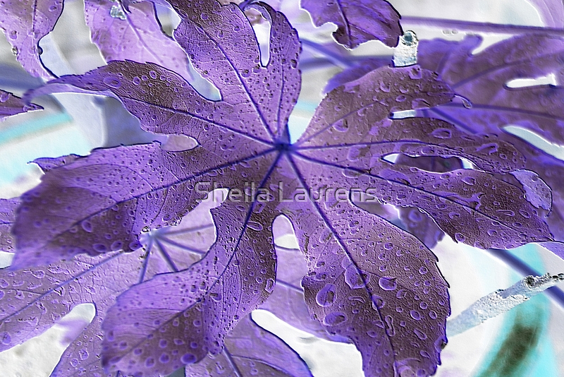 Castor Oil Plant Leaf In The Rain by Sheila Laurens