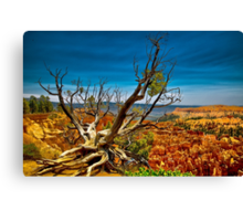 Bryce Canyon National Park, Utah  Canvas Print