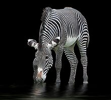 The Zebra and The Mill Pond by Sheila Laurens