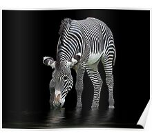 The Zebra and The Mill Pond Poster