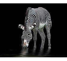 The Zebra and The Mill Pond Photographic Print