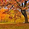 Beautiful Oak Trees $ 20.00 Voucher for November members only