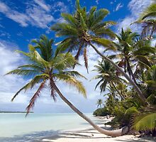 Canoe Beach Palms - Cocos (Keeling) Islands by Karen Willshaw