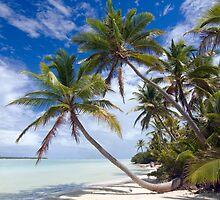 Canoe Beach Palms - Cocos (Keeling) Islands by Karen Willshaw