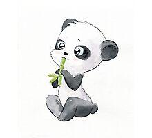 Panda Photographic Print