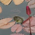 Frog Lily by Bob Hardy