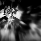 butterfly by Marianna Tankelevich
