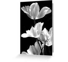 Spring In Black And White Greeting Card