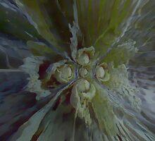 Cabbage by lumiwa