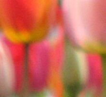 Tulip Abstract by AngieDavies