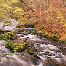 Autumn river scene by M.S. Photography/Art