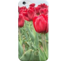 Lots of Red Tulips 3 iPhone Case/Skin