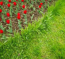Red Tulips and Green Grass by AnnArtshock