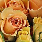 Apricot Roses by Keala