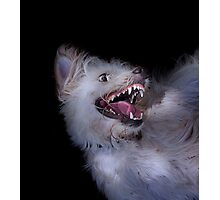 Dogs with game face on .17 Photographic Print