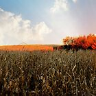 Country Life...corn by trueblvr